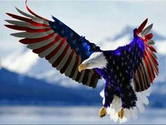 Red, white,  blue eagle