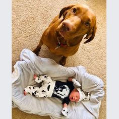 Baby Items For Dog Lovers (@monofaces) • Instagram photos and videos Vizsla, Baby Items, Dog Lovers, Babies, Gift Ideas, Photo And Video, Videos, Dogs, Photos