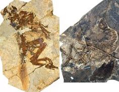 Baby Dinosaurs may have had Different Feathers from their Parents