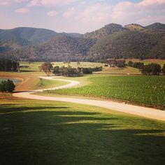 Vineyards at Mudgee wine growing area 3 hours from #Sydney #Australia by anneswans (instagram)
