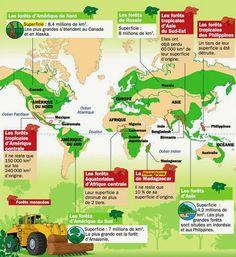 Forêts dans le monde