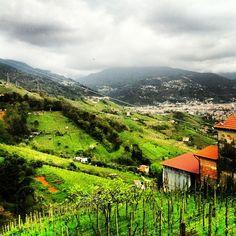Best taste of Lunigiana and Candia hills