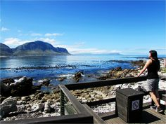 Bettys Bay Penguin Colony/South Africa 2014....such a amazing place!