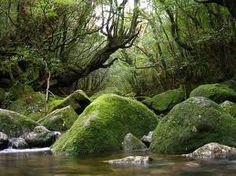 Google Image Result for http://3.bp.blogspot.com/_fkdBz7nDyp0/TP3uZnu1h2I/AAAAAAAABEA/194y3dSjbQY/s1600/Mononoke__s_forest_by_ryu_yo.jpg