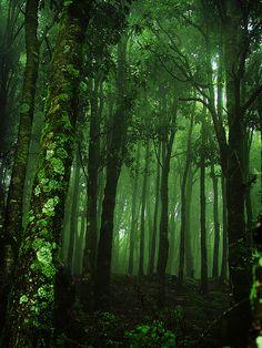 verde---➽viridi➽πράσινος➽green ➽verde➽grün➽綠➽أخضر ➽зеленый All Nature, Green Nature, Dark Tales, Beautiful World, Beautiful Places, Dark Green Aesthetic, Aesthetic Colors, Deep Forest, Metal Tree