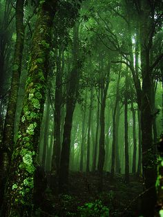 The closest we can get to clearing our minds is by taking a walk in the forest.
