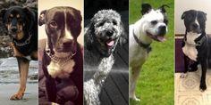 Justice Dealt to British Columbia Dog Walker After Six Dog Deaths