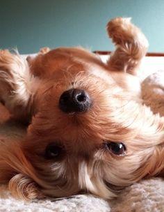 Our dog Sammie. Alexa and Tyler, Orlando, Florida. 9/26/13.
