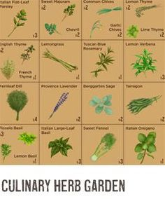culinary herb garden - pdf available at website
