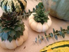 Hooray for fall: crisp, cool weather, pretty trees, and pumpkins. If you are looking to add some festive fall pumpkin decor around your home, here are 5 easy projects.