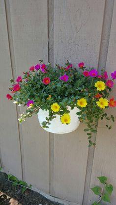 Portulaca Grandiflora, Good Morning Cards, Succulent Seeds, Exotic Flowers, My Flower, Indoor Plants, Garden Design, Planters, Backyard