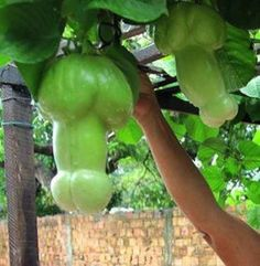 Luigi Fruit Garden — Cartagena, Colombia | 19 Penises You Need To Visit Before You Die