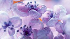 #1458222, blossom category - hd wallpaper blossom