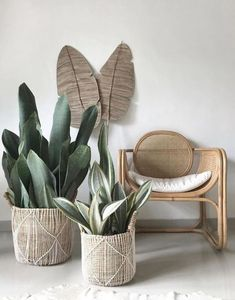 Tumblr is a place to express yourself, discover yourself, and bond over the stuff you love. It's where your interests connect you with your people. Plantas Indoor, Sansevieria Plant, Living Room Decor, Bedroom Decor, Decoration Plante, Mid-century Interior, House Plants Decor, Décor Boho, Snake Plant