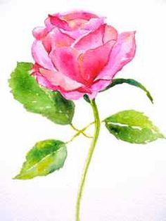 Pretty Rose Watercolor