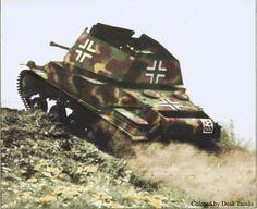 Hungarian Nimrod climb on hill.