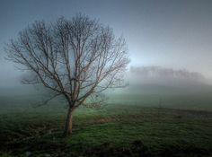Misty Morning Tree   Flickr - Photo Sharing!