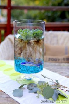DIY indoor water garden in a vase. Float water lettuce in a vase and use as a unique centerpiece. There are other aquatic plants to choose from as well.