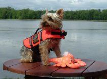 Outward Hound Pet Savor Dog Orginal Life Jacket Xsmall Yorkie Size