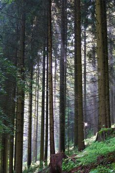 Woodland IMGP4524a by Biberius on DeviantArt