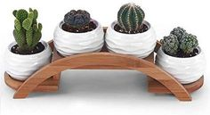 One Goods Ceramic White Mini Textured Succulent Plant Pot/Cactus Plant Pot with Bamboo Arched Tray Cactus Plant Pots, Succulent Pots, Potted Plants, Indoor Plants, Small Plants, House Plants Decor, Plant Decor, Cacti And Succulents, Planting Succulents