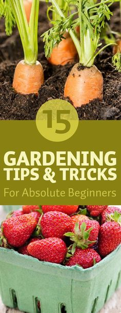 Starting your own garden can seem daunting at first. There are so many different types of vegetables herbs and flowers that all require different and precise care. Nobody wants to spend months of time lots of energy and of course money on their plants just to find out the results are not what they expected. So how to ensure that everything goes as planned and your garden is filled with delicious and healthy homegrown vegetables as well as beautiful flowers? Do some research and learn from…