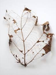 leaf skeleton에 대한 이미지 검색결과