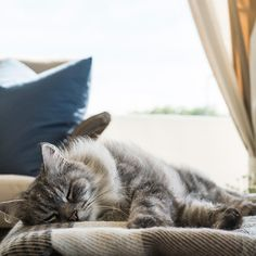 Via T+L  (www.travelandleisure.com).  Stalking the success of cat cafes, Ings Luxury Cat Hotel in Yorkshire, England will entertain your cat while you're on vacation. Feline guests enjoy four-poster beds, heated floors, a spa, and 42-inch monitors playing infuriating videos of birds and fish.