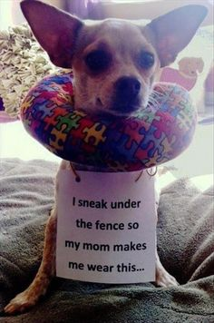 """""""I sneak under the fence so my mom makes me wear this."""" ~ Dog Shaming shame"""