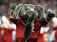 """""""Big Al"""" - U of A's mascot"""