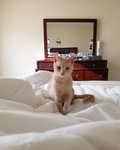 My handsome boy Cosmo http://ift.tt/2AzKeGx