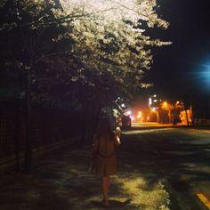 새벽 산책 꽃 봄