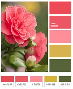 color palette for apt