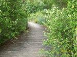 Our fav. walk path