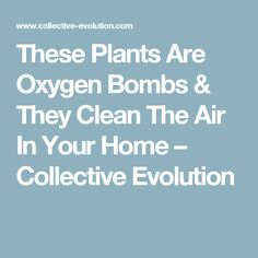 These Plants Are Oxygen Bombs & They Clean The Air In Your Home – Collective Evolution