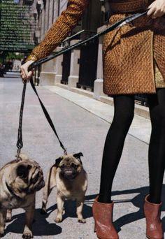 Pugs are practically stylish...