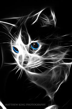 Fractal cat by BlueBlur7000 on DeviantArt