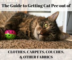 Cats are generally pretty awesome. They're less awesome when they pee on things. If you have cat urine to remove from washable fabrics, carpets, or couches, read on. Cleaning Cat Urine, Remove Cat Urine Smell, Cat Urine Smells, Cleaning Tips, Cleaning Supplies, Cleaning Products, Cleaning Solutions, Dog Urine, Pet Odors