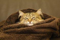 ahhh!! winter is coming [38722592] http://ift.tt/2A474pG