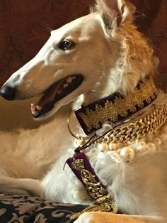 best images and photos ideas about saluki dog - oldest dog breeds Beautiful Dogs, Animals Beautiful, Animals And Pets, Cute Animals, Borzoi Dog, Whippets, Saarloos, Russian Wolfhound, Old Dogs
