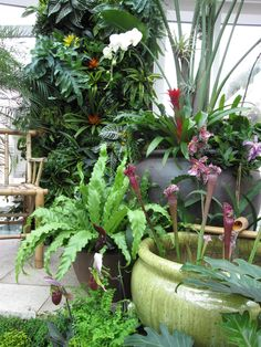 A Small Tropical Garden Moment In Tropical