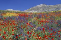 Wildflowers and mountain by Sue Bishop Photography