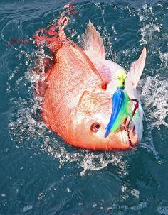 Puerto Vallarta Fishing - Red Snapper www.vallartavisitors.com