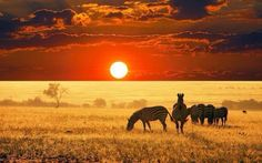 anim, sunrises, african safari, sunsets, natur, beauti, travel, place, zebras
