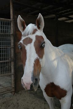Quit lookin at me like that, Cookie! Horse Barns, Horse Stalls, Horse Horse, Most Beautiful Animals, Beautiful Horses, Horse Markings, Horse Training, Training Tips, Reining Horses