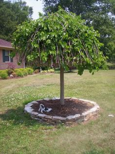 1000 images about backyard landscaping ideas on pinterest for Tree edging border ideas