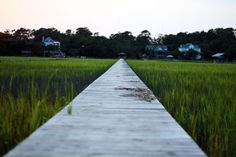 Boardwalk, marsh and housesPawley's Island, SC