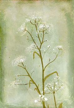 Botanical illustration by Anita Tomala, via Behance