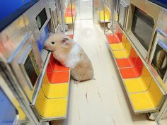 hamsters- they're just like us!