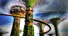 """""""Garden by the Bay Super Tree Singapore"""" by William Yee Khai Teo, Singapore // Garden by the Bay, Super Tree, Singapore // Imagekind.com -- Buy stunning fine art prints, framed prints and canvas prints directly from independent working artists and photographers."""